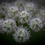 zwykły kwiatek