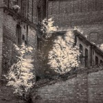 zielone miasto- fot Kasia Nizinkiewicz