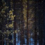 z Leśną w lesie